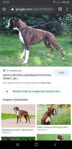 Cachorro Box  - Foto 3