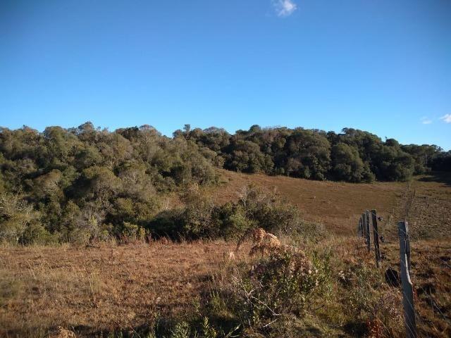 Belíssima área de campo para sitio de lazer com 30000 m² - Foto 3
