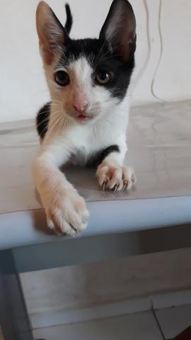 Gato pra adoção. - Foto 2