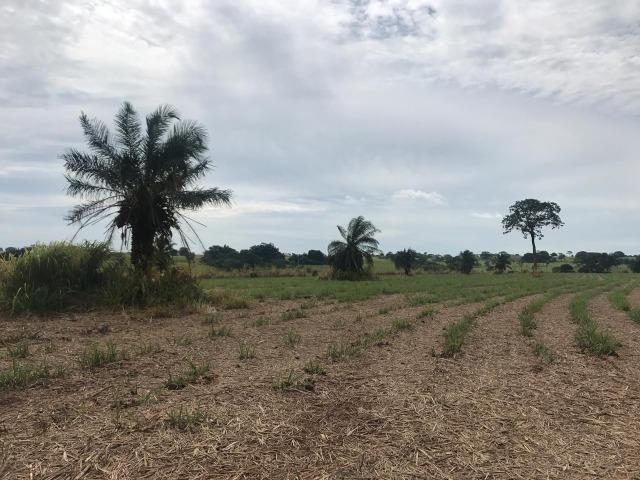 Vende-se Fazenda na Cidade de Dirce Reis-SP - Foto 19