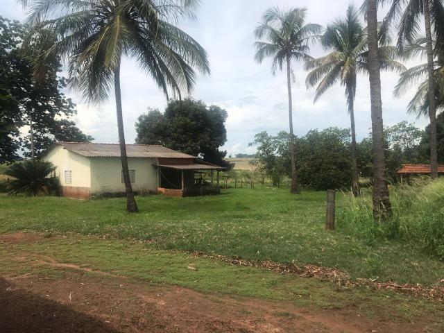 Vende-se Fazenda na Cidade de Dirce Reis-SP - Foto 10