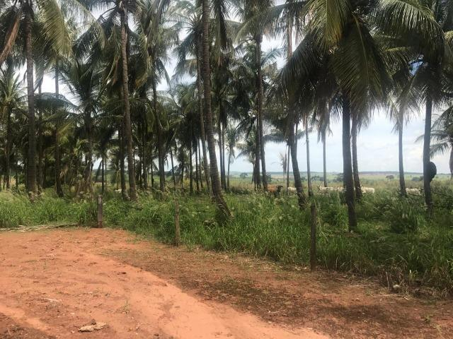 Vende-se Fazenda na Cidade de Dirce Reis-SP - Foto 20
