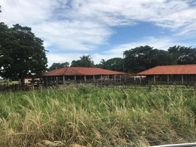 Vende-se Fazenda na Cidade de Dirce Reis-SP - Foto 2