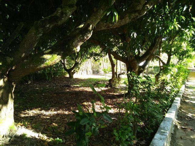 Sítio na ilha Taíru, 08 minutos da praia - Foto 5