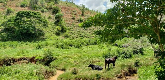 Fazenda 295 hectares próximo de Governador ValadaresMG - Foto 7