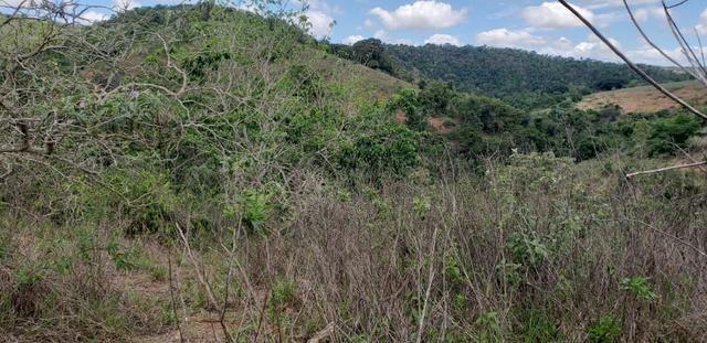 Fazenda 295 hectares próximo de Governador ValadaresMG - Foto 6