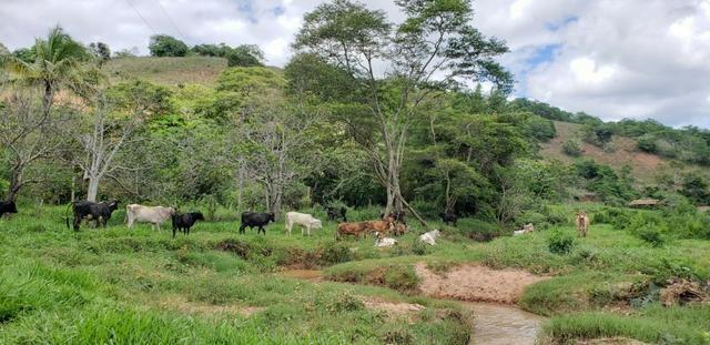 Fazenda 295 hectares próximo de Governador ValadaresMG