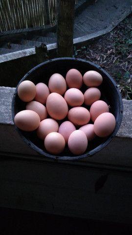 Ovos caipira, consuma e viva com mais saúde!