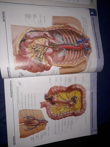 Dois Atlas de Anatomia Humana do Netter - volumes 1 e 2 - Foto 5
