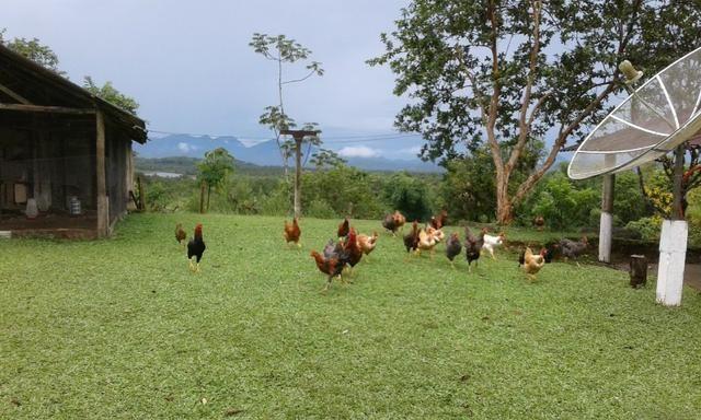 Excelente fazenda em Antonina 40 Alqueires - Foto 4