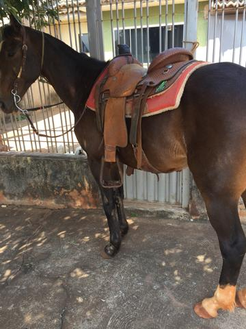 Cavalo meio sangue manga larga - Foto 3