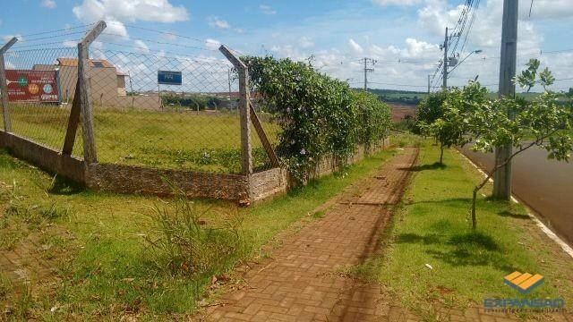 Terreno à venda em Alto das grevileas, Maringá cod:1110006021 - Foto 4