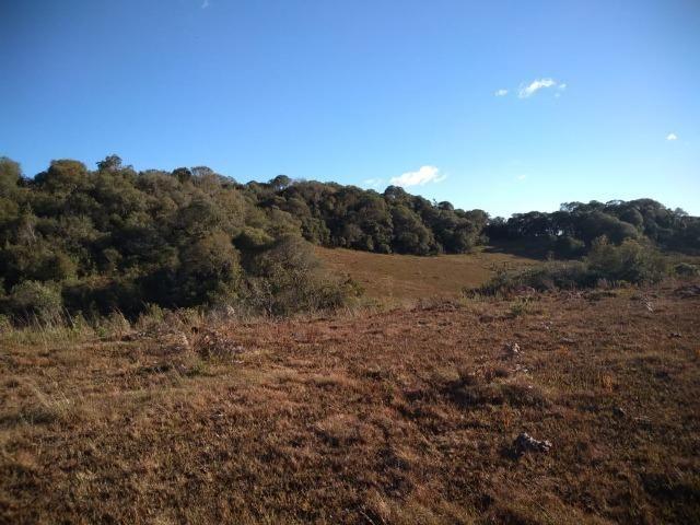 Belíssima área de campo para sitio de lazer com 30000 m² - Foto 4