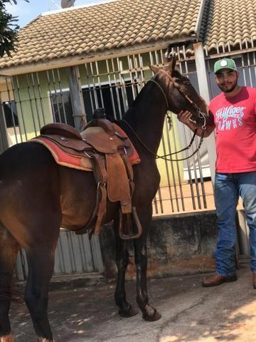 Cavalo meio sangue manga larga - Foto 4