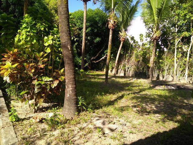 Sítio na ilha Taíru, 08 minutos da praia - Foto 9