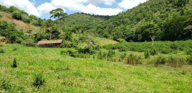 Fazenda 295 hectares próximo de Governador ValadaresMG - Foto 18