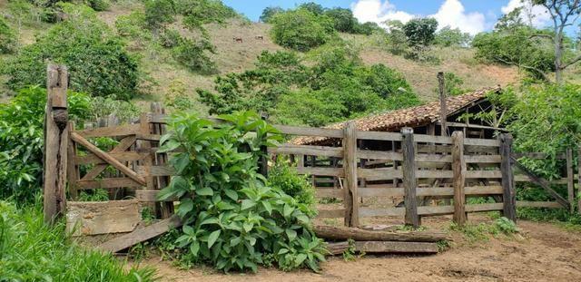 Fazenda 295 hectares próximo de Governador ValadaresMG - Foto 14