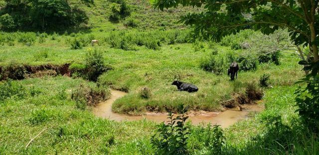 Fazenda 295 hectares próximo de Governador ValadaresMG - Foto 13