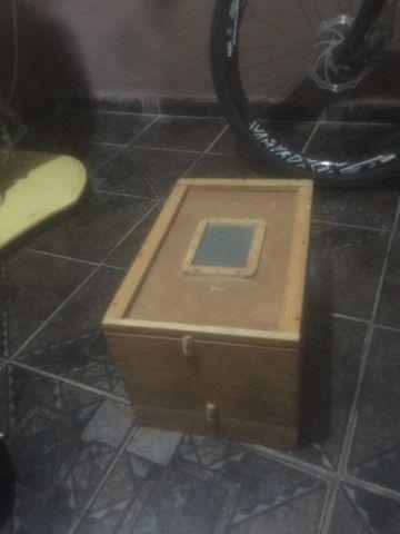 Caixa de Tenébrio molidor - Foto 3