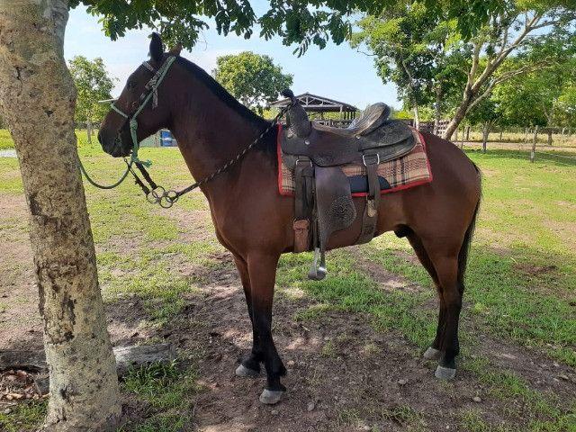 Cavalo - Nome Majestoso