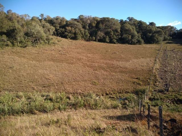 Belíssima área de campo para sitio de lazer com 30000 m² - Foto 8