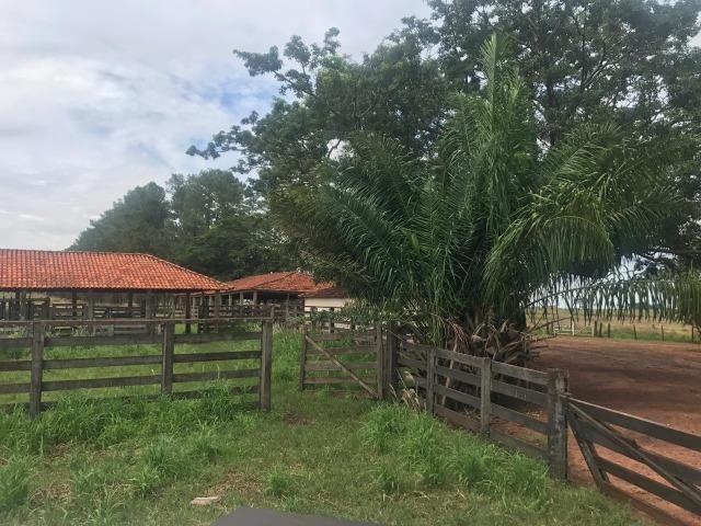 Vende-se Fazenda na Cidade de Dirce Reis-SP - Foto 13