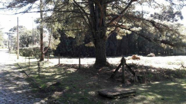 Casa à venda com 2 dormitórios em Parque das hortênsias, Canela cod:NI05502 - Foto 7