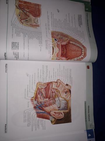 Dois Atlas de Anatomia Humana do Netter - volumes 1 e 2 - Foto 6