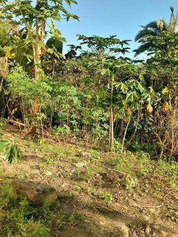 Vendo Sítio na Serra S. Vicente - Foto 4