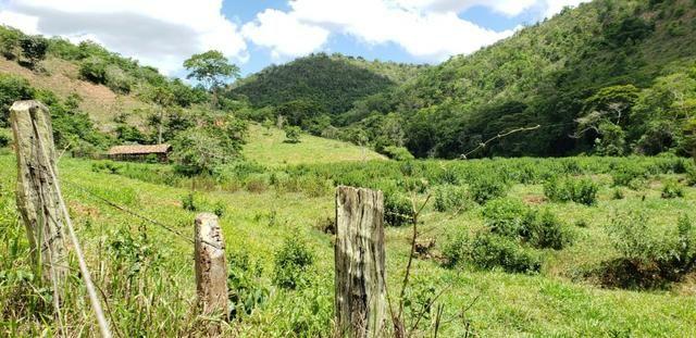 Fazenda 295 hectares próximo de Governador ValadaresMG - Foto 12