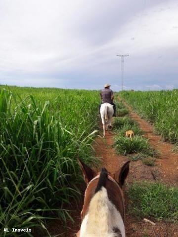Fazenda para Venda em Gurupi, Área Rural de Gurupi, 3 dormitórios, 2 banheiros, 5 vagas - Foto 10