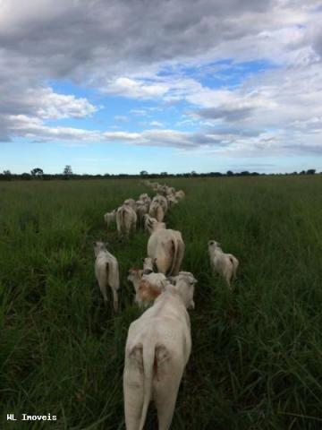 Fazenda para Venda em Gurupi, Área Rural de Gurupi, 3 dormitórios, 2 banheiros, 5 vagas - Foto 9