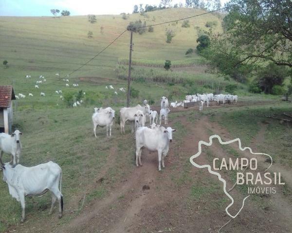 Fazenda de 98 alqueires no Sul de Minas! - Foto 8