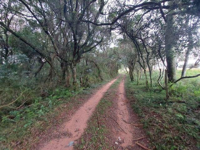 Sitio 8 hectares, 2 casas e pomar, ótimas pastagens, Velleda oferece - Foto 14