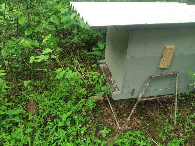 Enxame de abelha italiana. - Foto 4