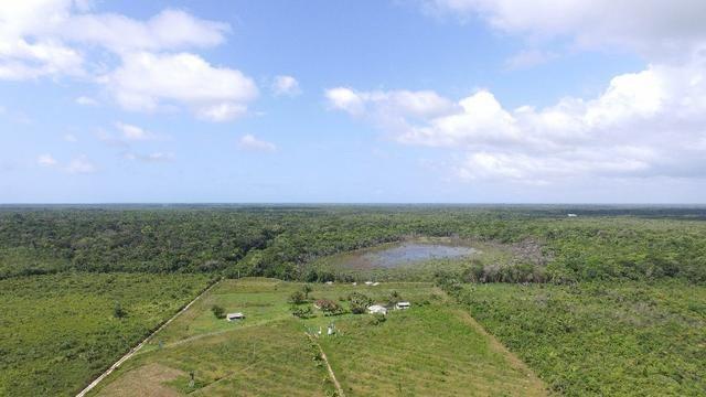 Fazenda em Marapanim com 80 hectares documentada por 300 mil, a pastagem foi substituída p