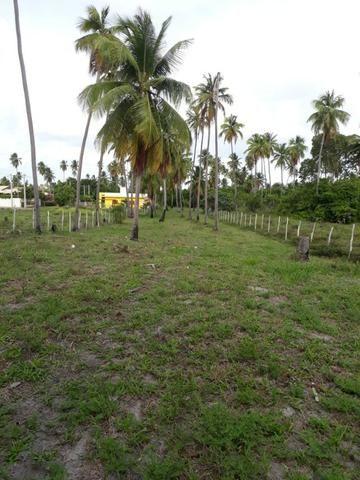 Patacho, venha morar ou ter um negocio em uma das praias mais belas do país. - Foto 4