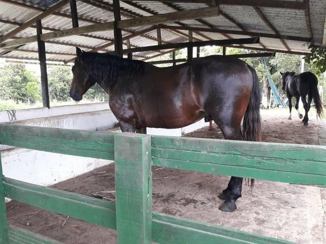 Sítio com 11.67 hectares em Igarassu/PE - Foto 16