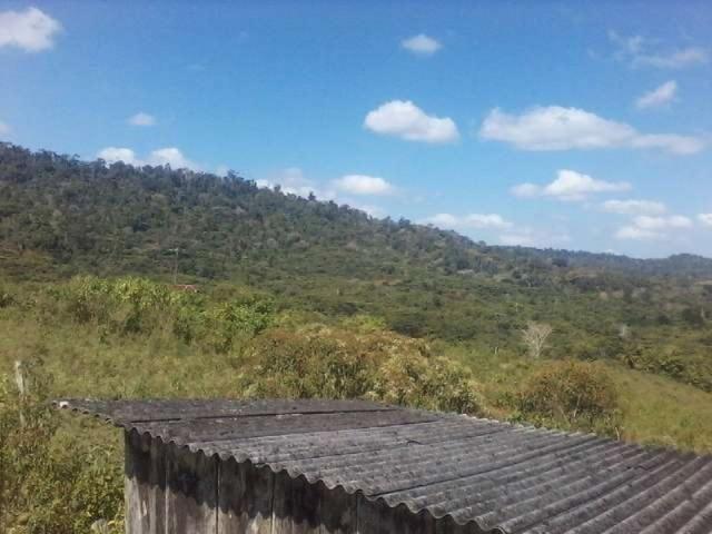 Fazenda de cacau no sul da bahia. mascote - camacã - itabuna - Foto 5