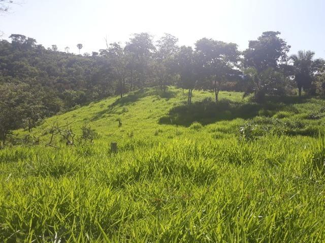 Chácara de 54 hectares, chapada,sendo 33 formado - Foto 7