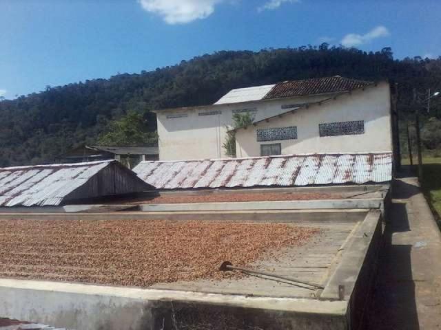Fazenda de cacau no sul da bahia. mascote - camacã - itabuna - Foto 6