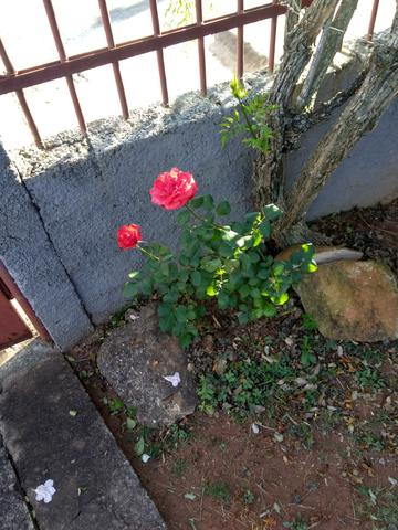 Casinha Aconchegante - Foto 16