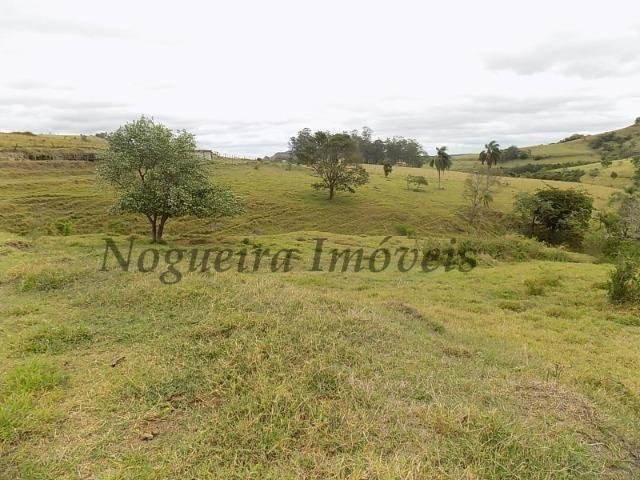 Fazenda de 65 alqueires na região (Nogueira Imóveis Rurais) - Foto 16