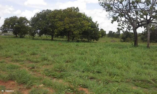 Fazenda para Venda em Gurupi, Área Rural de Gurupi, 3 dormitórios, 2 banheiros, 5 vagas - Foto 11