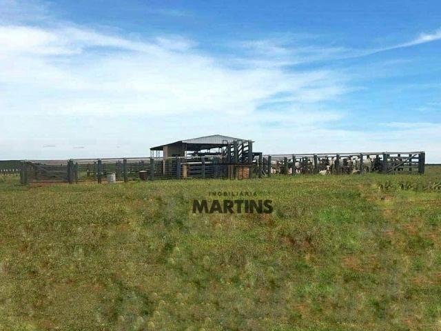 Fazenda - Bataguassu - Mato Grosso do Sul - Foto 3