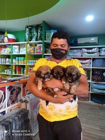 Bebês lhasa com preço incrível CONFIRA!!
