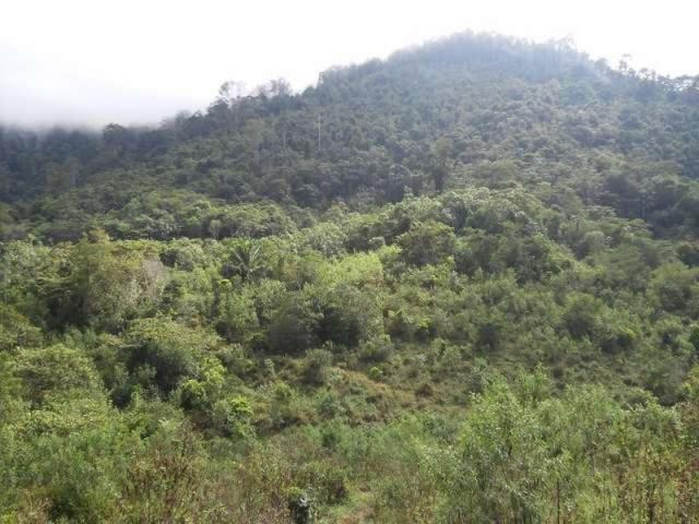 Fazenda de cacau no sul da bahia. mascote - camacã - itabuna - Foto 7
