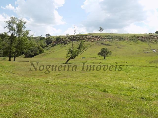 Fazenda de 65 alqueires na região (Nogueira Imóveis Rurais) - Foto 10