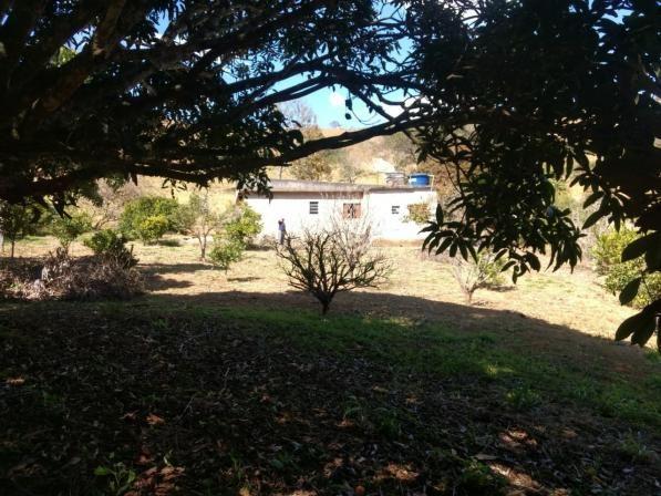 Sítio à venda com 2 dormitórios em Morro da mata, Cachoeira do campo cod:5931 - Foto 7
