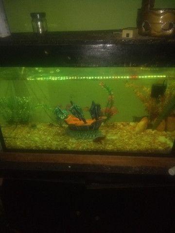 aquário de água doce